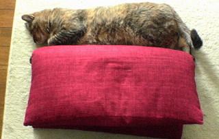Coco20070313_cat